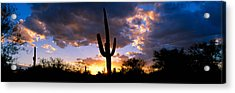 Saguaro Cactus, Sunset, Tucson Acrylic Print by Panoramic Images