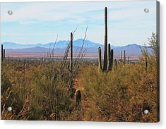 Acrylic Print featuring the photograph Saguaro Desert by Alicia Knust