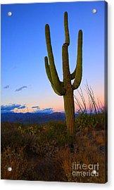 Saguaro Dusk Acrylic Print by Mike  Dawson