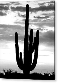 Saguaro In Black And White Acrylic Print