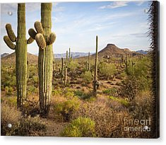 Acrylic Print featuring the photograph Saguaro Twins by Marianne Jensen