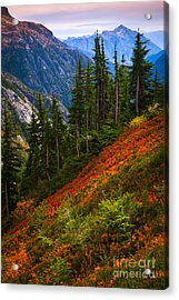 Sahale Arm Acrylic Print by Inge Johnsson
