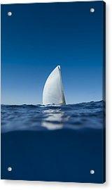 Sail Fin Acrylic Print by Chris Cameron