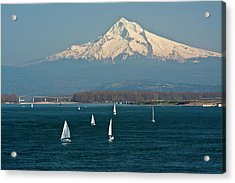 Sailboats, Columbia River, Mount Hood Acrylic Print