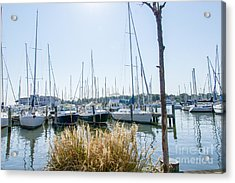 Sailboats On Back Creek Acrylic Print by Charles Kraus