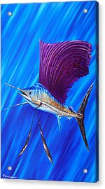 Acrylic Print featuring the painting Sailfish by Steve Ozment