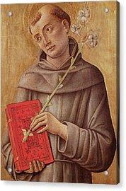 Saint Anthony Of Padua  Acrylic Print by Bartolomeo Vivarini