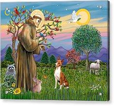 Saint Francis Blesses A Basenji Acrylic Print by Jean Fitzgerald