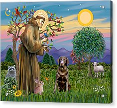 Saint Francis Blesses A Chocolate Labrador Retriever Acrylic Print