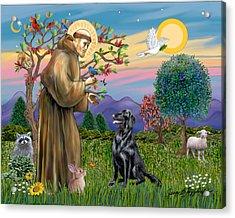 Saint Francis Blesses A Flat Coated Retriever Acrylic Print by Jean B Fitzgerald
