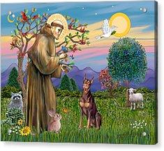 Saint Francis Blesses A Red Doberman Acrylic Print