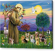 Saint Francis Blesses Seven Yorkies Acrylic Print by Jean Fitzgerald