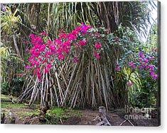 Saint Lucian Plantation Acrylic Print