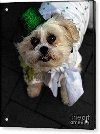 Saint Patrick's Day  Acrylic Print by Steven Digman