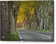 Saint Remy Trees Acrylic Print by Brian Jannsen