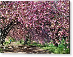 Sakura In Central Park Acrylic Print