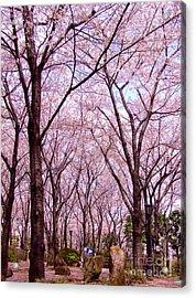Acrylic Print featuring the photograph Sakura Tree by Andrea Anderegg