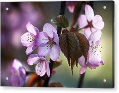 Sakura Acrylic Print by Vetre Antanaviciute Meskauskiene