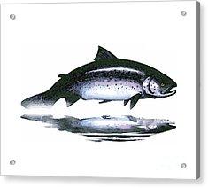 Salar - The Leaper Acrylic Print
