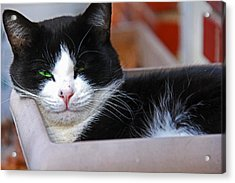 Salem Resting Acrylic Print by Andy Lawless