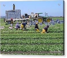 Salinas Farmworkers Acrylic Print
