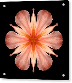 Salmon Daylily I Flower Mandala Acrylic Print by David J Bookbinder