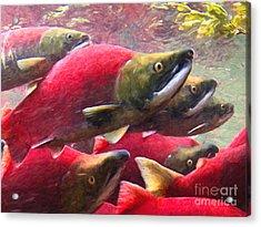 Salmon Run - Painterly Acrylic Print by Wingsdomain Art and Photography