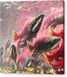 Salmon Run - Square - Painterly - 2013-0103 Acrylic Print by Wingsdomain Art and Photography