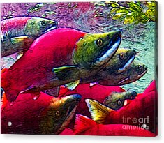 Salmon Run Acrylic Print by Wingsdomain Art and Photography
