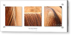 Salon D'equus Light Acrylic Print