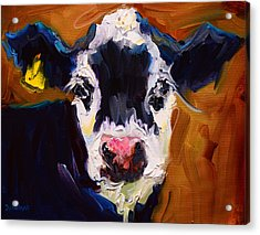 Salt And Pepper Cow 2 Acrylic Print