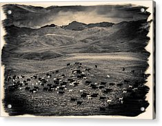 Salt And Pepper Pasture Acrylic Print by Todd Klassy