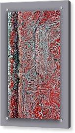 Salt Cystals Acrylic Print by Dennis Weiser