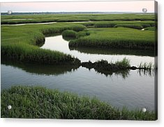 Salt Marsh Acrylic Print