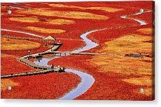 Salt Pond Acrylic Print by Tiger Seo