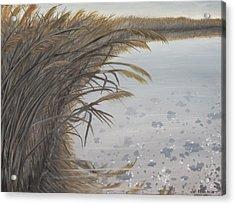 Salt Swamp #2  Acrylic Print