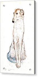 Saluki Acrylic Print by Kurt Tessmann