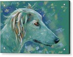 Saluki Dog Painting Acrylic Print by Michelle Wrighton