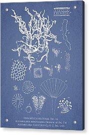 Salwater Algae Acrylic Print by Aged Pixel