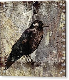 Same Crow Different Day Acrylic Print by Carol Leigh