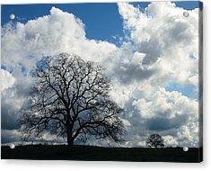 Same Tree Many Skies 13 Acrylic Print