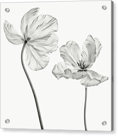 Same Tulip : Front- And Backview Acrylic Print