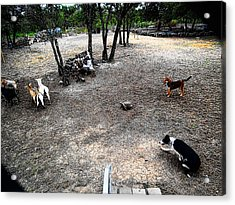 Acrylic Print featuring the digital art Sammy Helping Dogs Herd Goats by Robert Rhoads