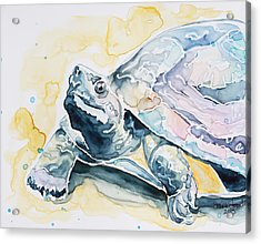 Sammy The Turtle Acrylic Print