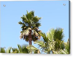 San Diego Zoo - 1212130 Acrylic Print by DC Photographer