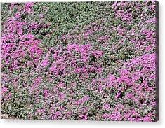 San Diego Zoo - 1212226 Acrylic Print