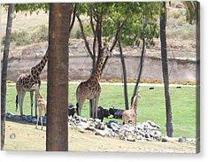 San Diego Zoo - 1212296 Acrylic Print by DC Photographer