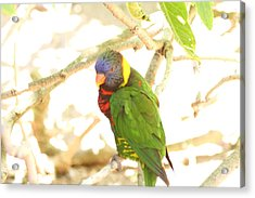 San Diego Zoo - 1212344 Acrylic Print by DC Photographer