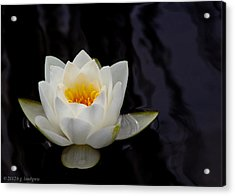San Francisco Water Lily Acrylic Print by Bruce Lundgren