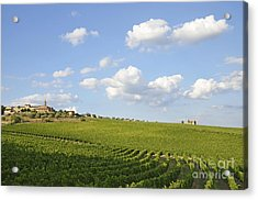 San Gusme Vineyards Acrylic Print by Sami Sarkis